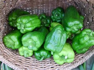 Green Bell Peppers at Falmouth Farmers Market in July 2016