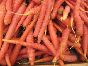 Carrots forRussian Salad - Waste Not Recipe - Falmouth Farmers Market 2016