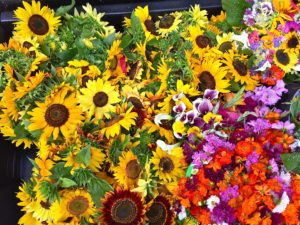 Peachtree Circle Farm Flowers